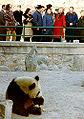 PN views panda.jpg
