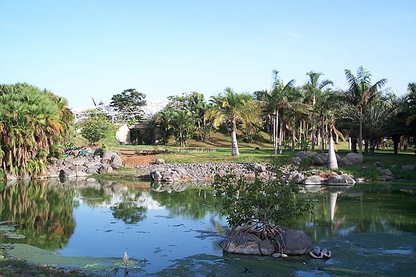 Palmetum (Santa Cruz de Tenerife)