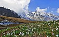 Panorama Campogrosso - Piccole Dolomiti.jpg