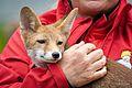 Parc du Petit Prince, le renard.jpg