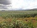 Parc natural de s'Albufera de Mallorca 11.jpg