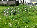 Paris-biodiversite-02.jpg
