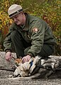 Park Ranger, Dog Demonstration (6473137843).jpg