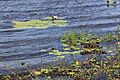 Parque Nacional da Restinga de Jurubatiba 32.jpg