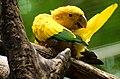 Parque das Aves 002.jpg