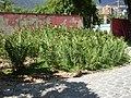 Parque del Este 2012 077.JPG