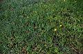 Parterre de plantes grasses.jpg