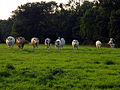 Pasture near Wash Water - geograph.org.uk - 56124.jpg