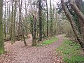 Path divides in Churchdown Wood - geograph.org.uk - 1222829.jpg