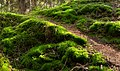 Path through moss into Gullmarsskogen ravine.jpg