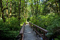 Path to Chatterbox Falls 2015.jpg