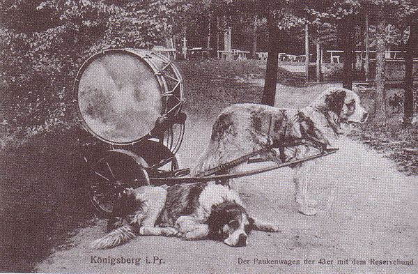 Prior to World War II, the US military did not have a formal K-9 corp