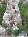 Pflanzen auf alter Mauer in Umag.JPG
