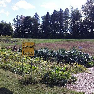 Phillies Bridge Farm - The educational plot of vegetables and plants of Phillies Bridge Farm Project 2015