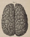 Physiology for Young People - 1884 - Surface of the cerebrum.png