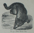 Picture Natural History - No 3 - The Wild Cat.png