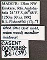Pilotrochus besmerus casent0005888 label 1.jpg