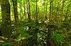 Pirus Road Swamp.jpg