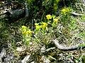 Plants OB 638 (38880976751).jpg