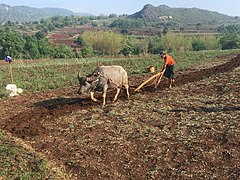 Plowing in Kalaw Township.jpg