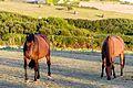 Plozevet - Horses - 06.jpg