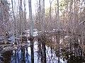 Pludi druvciema 2011 - panoramio (26).jpg
