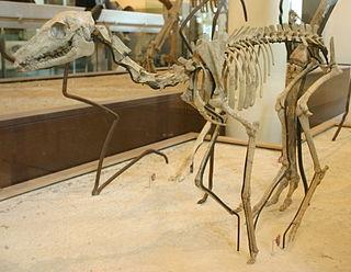 <i>Poebrotherium</i>