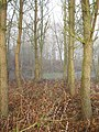 Pond, Weymore - geograph.org.uk - 640732.jpg