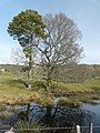 Pond near Scotsburn House - geograph.org.uk - 1803371.jpg