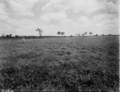 Queensland State Archives 1830 Irrigated pasture experiment Regional Experiment Station Ayr November 1955.png