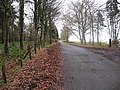 Quiet road - geograph.org.uk - 625795.jpg