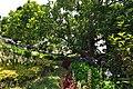 Quinta das Vinhas ^ Cottages, Estreito da Calheta, Madeira, Portugal, 27 June 2011 - Main house area - panoramio (14).jpg