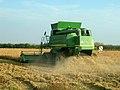 Récolte du riz en Camargue.JPG