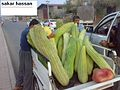 RAWA IRAQ 10.jpg