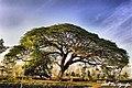 RESAN MBRUMBUNG - panoramio.jpg
