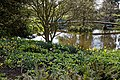 RHS Garden Hyde Hall, Essex, England ~ Lower Pond east side 02.jpg