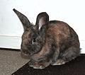 Rabbit (8085135997).jpg