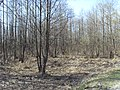 Raditsa-Krylovka, Bryanskaya oblast', Russia - panoramio (29).jpg