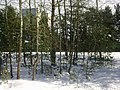 Rahumäe, Tallinn, Estonia - panoramio (13).jpg