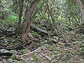 Rainforest-by-Woolshed-Creek.jpg