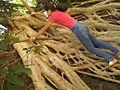 Raiz exposta de uma linda árvore em hotel do barreiro em araxá mg 2014-05-19 11-34.jpg
