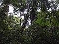 Ranomafana National Park 2013 4.jpg