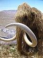 Reconstitution d'un mammouth 4.jpg