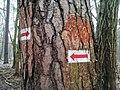 Red trail in Wielkopolski National Park (10).jpg