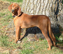 Image Result For Hunting Dog Training
