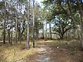 Reed Bingham State Park Gopher Tortoise Trail.JPG
