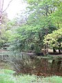 Reflections in pond - May 2012 - panoramio.jpg