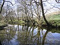 Reflections on the Shinnel Water - geograph.org.uk - 404448.jpg