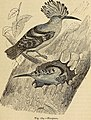 Reptiles and birds. A popular account of the various orders; with a description of the habits and economy of the most interesting. (1873) (14563017890).jpg
