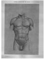 Richer - Anatomie artistique, 2 p. 85.png